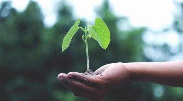Plante hos Miljø Rent